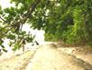 Strand von Canigao