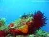 Fische, Fische, Fische.... so weit das Auge blicken kann. Schwarm in ca. 10 Metern Entferung