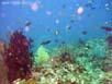 Mahaba ... auch hier gibt es Fische