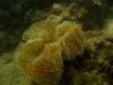 Hindang - 7 Meter Tiefe
