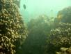Korallenformationen auf den Steinen von Hindang