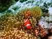 die Nemo - Familie, noch glücklich beisammen - ;) für alle die den Film geguckt haben