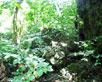 Auf dem Weg zum Eingang zur Tropfstein- oder heutigen Fledermaushöhle