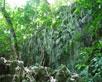 Felsen, Lianen und 1000 jährige Tropenbäume auf dem Weg zur Tropfsteinhöhle